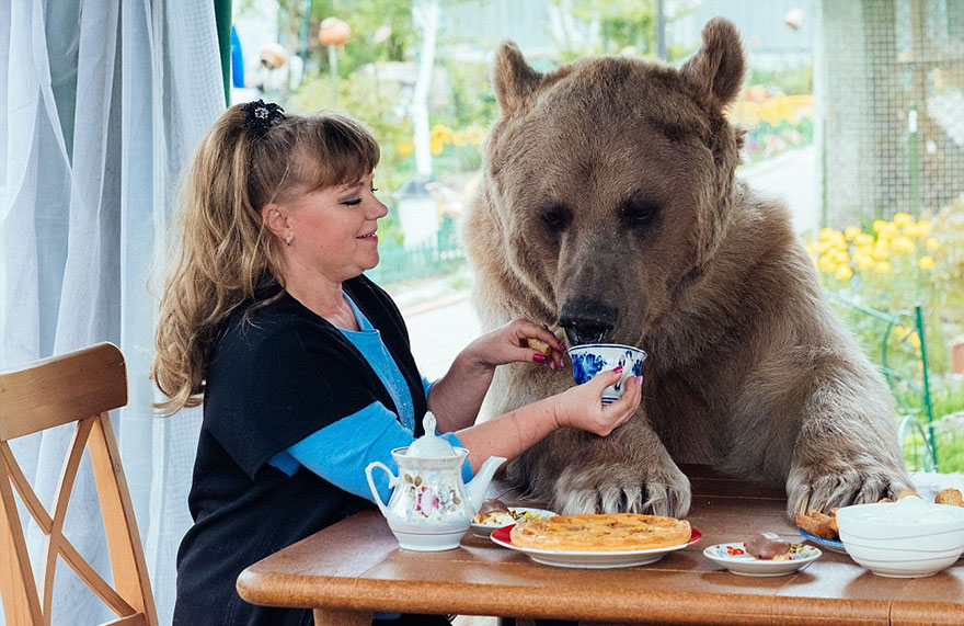 Russian Couple Adopted An Orphaned Bear 23 Years Ago, And They Still Live Together - He does enjoy his cup of tea, too