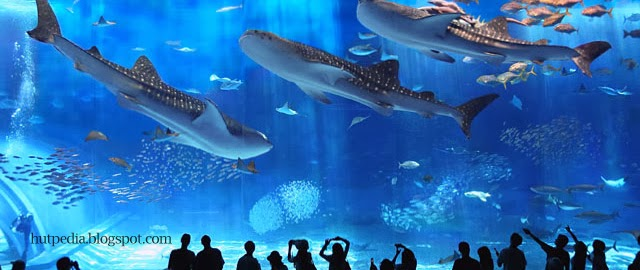 World Largest Aquarium Tank Kuroshio Sea Small Luxury Hotels India