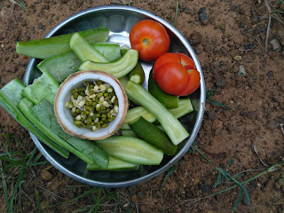Sun cooked lunch (Salad) - Cucumber, Snake gourd, Green gram sprouts, Coconut, Tomato