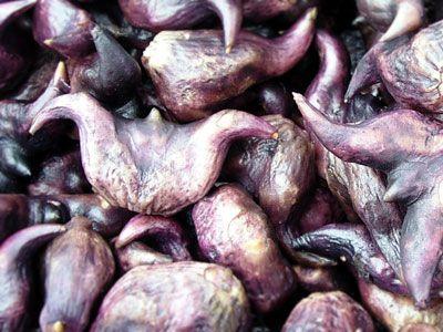 Củ Ấu - Trapa bicornis - Nguyên liệu làm thuốc Chữa Cảm Sốt
