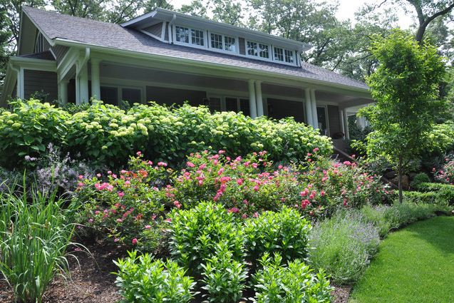 planting a sloped front yard bushes hydrangeas