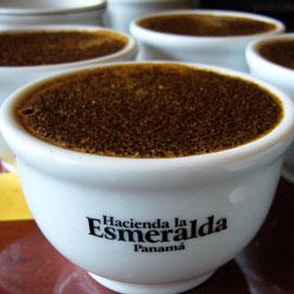 Hacienda La Esmeralda kopi terbaik dan termahal di dunia