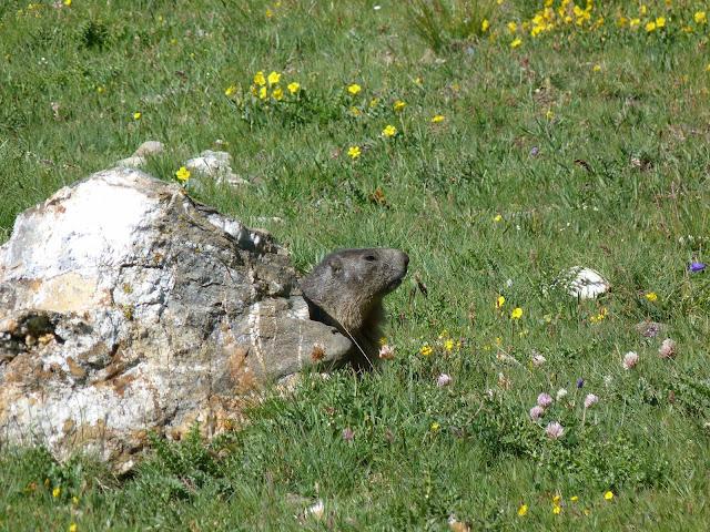 randonnée - photo - animal - faune - passion - montagne