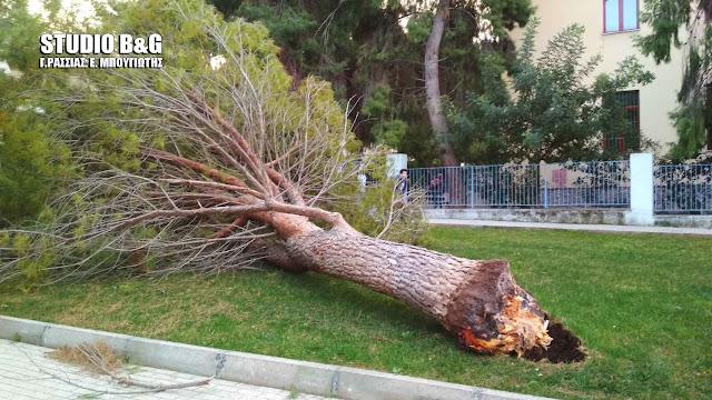 Τρόμος από πτώση δέντρου στο 3ο Δημοτικό σχολείο Ναυπλίου