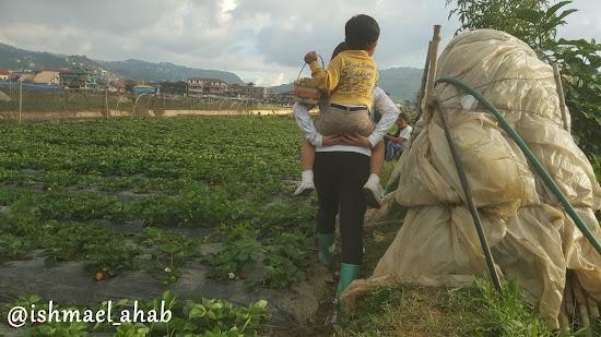 Lady farmer give Baby Ahab a piggyback ride at Strawberry Farm in La Trinidad, Benguet