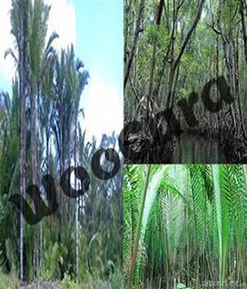 Flora Indonesia Bagian Timur
