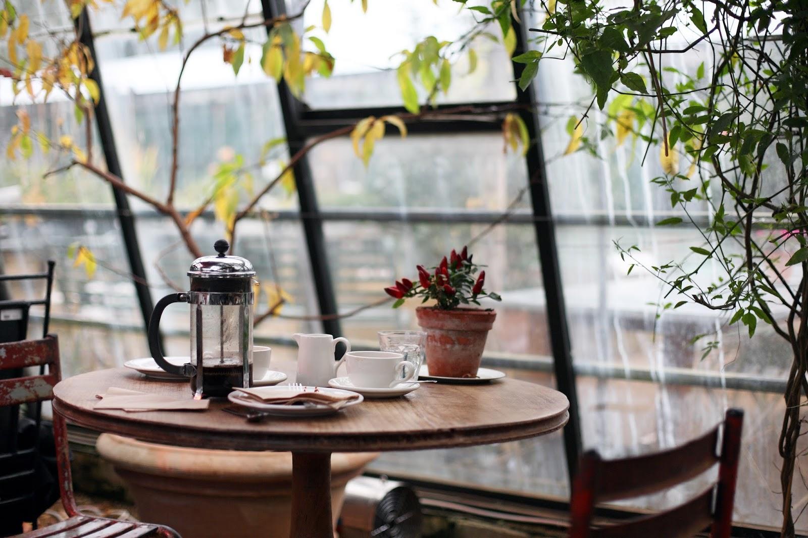 kawa w oranżerii