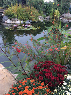 pond fall flowers mums water lilies