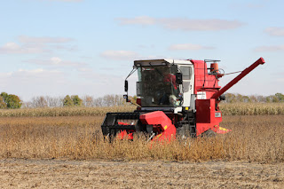 soybean-plot-harvest-lamberton