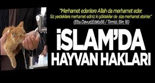 İslamiyette Hayvan Haklari ve Hayvanlara Eziyetin Cezalari