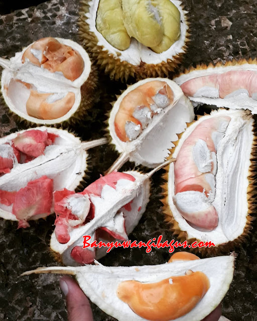 Kampung durian Banyuwangi, Likin durian Garden.