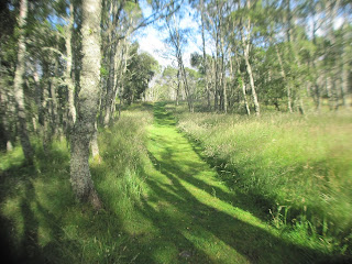 A grassy path near Loch Kinord nature reserve