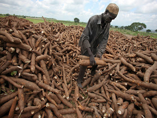 Agric College partners foreign investor on cassava production enterprise 2