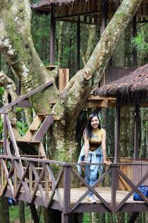 Rumah Pohon Wisata Hutan Pinus Songgon