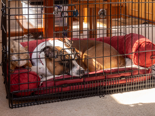 Photo of Ruby laying quietly in her cage as Ravensdale left the marina