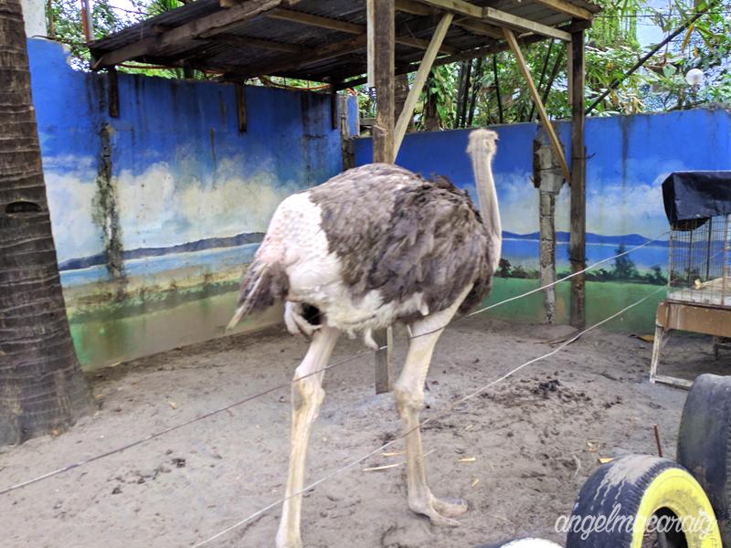Hello Ostrich!