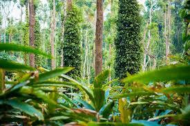 Top Resorts in Thekkady - Spice Plantation