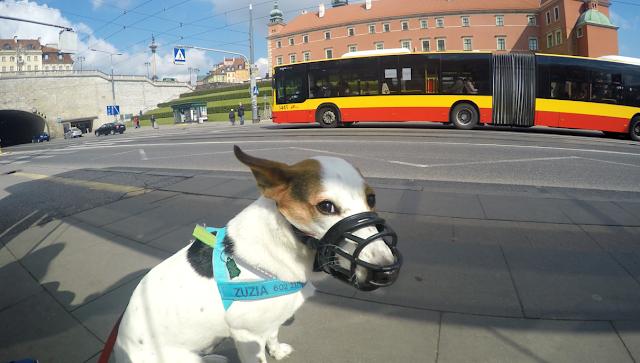 Wycieczka z psem