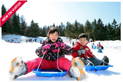 Source: Viator website. Enjoy sledding as part of Viator's Ski Resort Sledding and Strawberry Picking Day Trip including Crab Lunch Buffet experience.