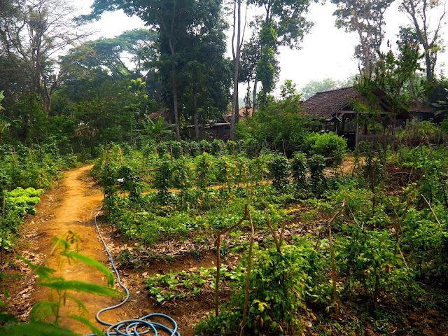 Vegetable garden at PPLH Seloliman Nature Reserve, East Java, Indonesia