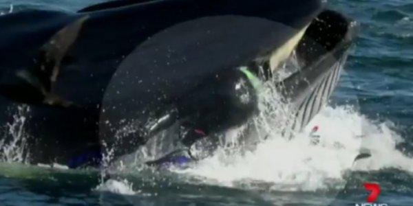 Απίστευτο: Φάλαινα μασάει δύτη και παραλίγο να τον καταπιεί! (βίντεο)
