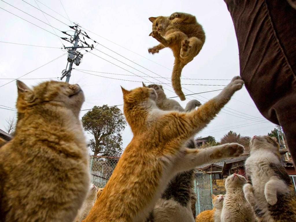 Pulau Kucing Di Negara Jepang Mampir Yuk Kerumahku