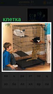 в помещении стоит клетка с кошками и сидит мальчик рядом