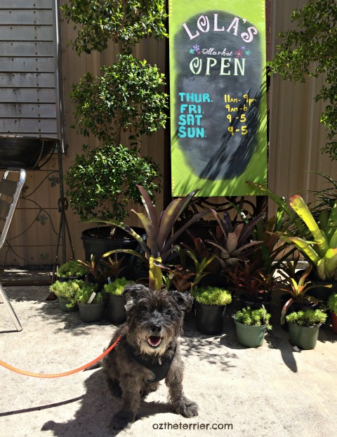 Oz at dog friendly Lola's Place Wilton Manors Florida