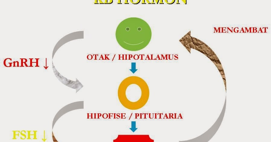 Materi Makalah Sistem Hormon Manusia  Devisologi