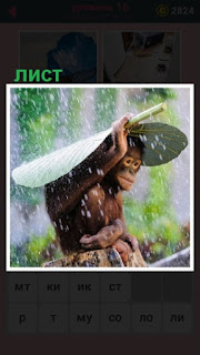 во время дождя обезьяна спряталась под листом растения