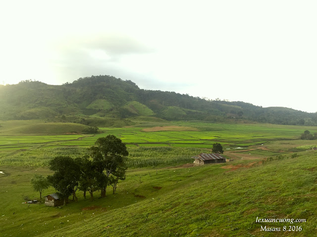 Xa xa là nếp nhà và phía trước là đồng lúa chín, ánh vàng trong nắng sớm.