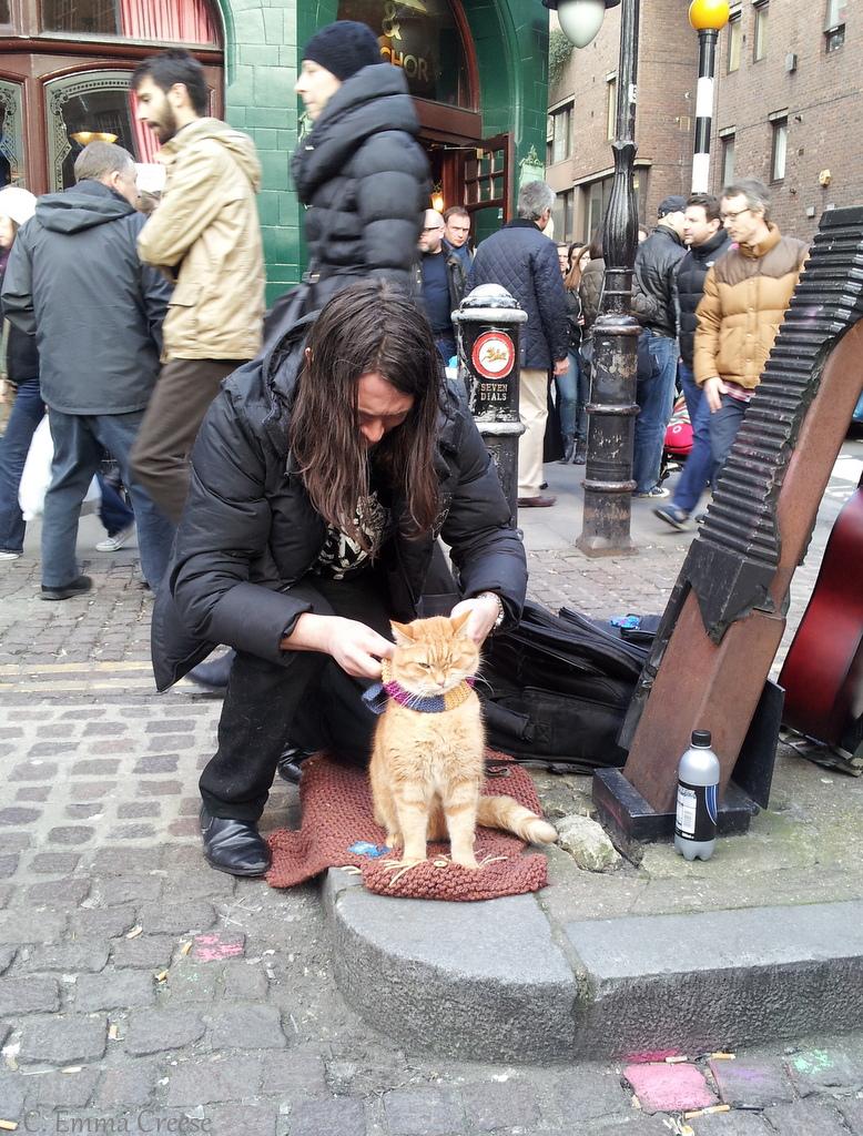 Meeting A Celeb A Street Cat Called Bob Adventures Of A