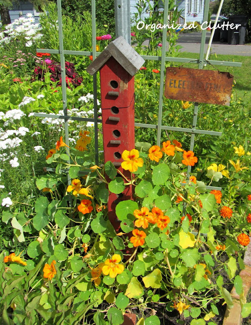 Nasturium and birdhouse condo