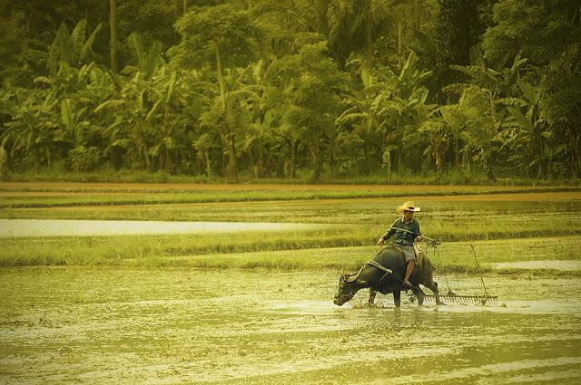 Farmer in Kota Belud, Sabah