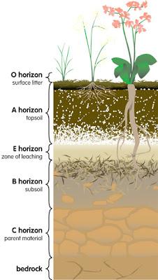 LAPORAN PRAKTIKUM  DASAR ILMU TANAH  Acara IV. PengenalanProfi Tanah