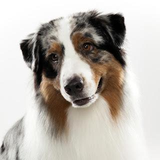 Rüyada köpek anlamı