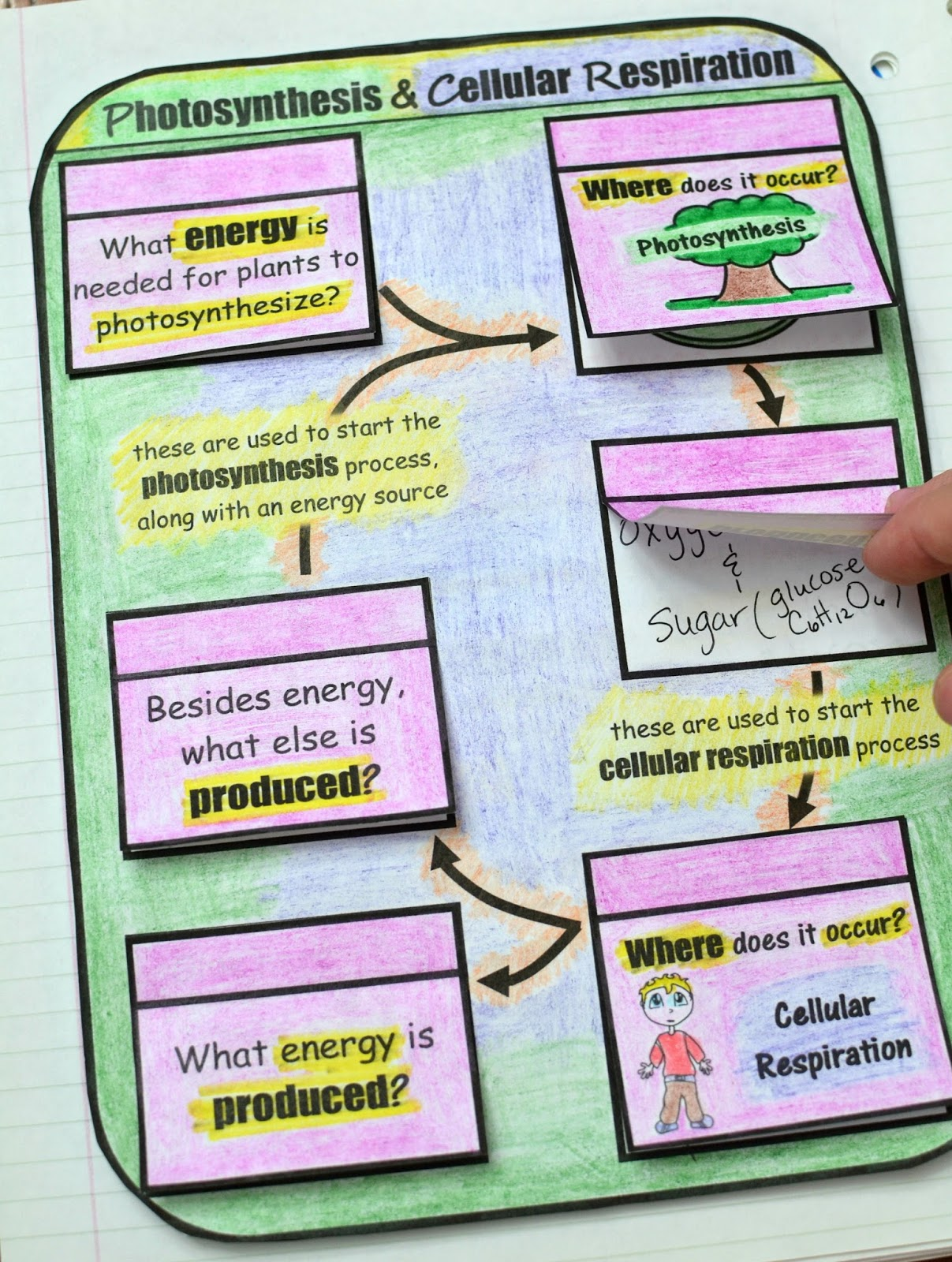 Photosynthesis And Cellular Respiration Foldable