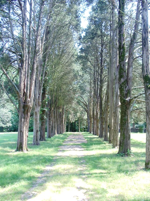 Tree-lined path to cemetery at Gunston Hall
