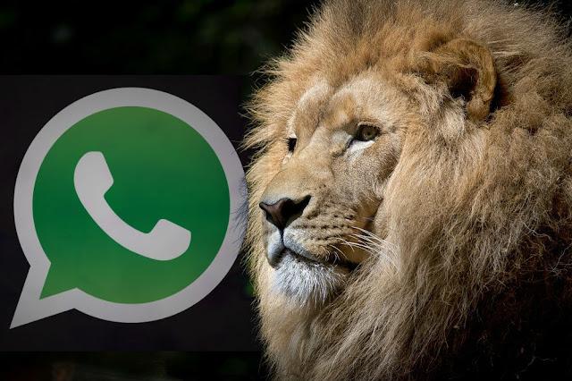 Enviar fotografías por whatsapp sin perder calidad