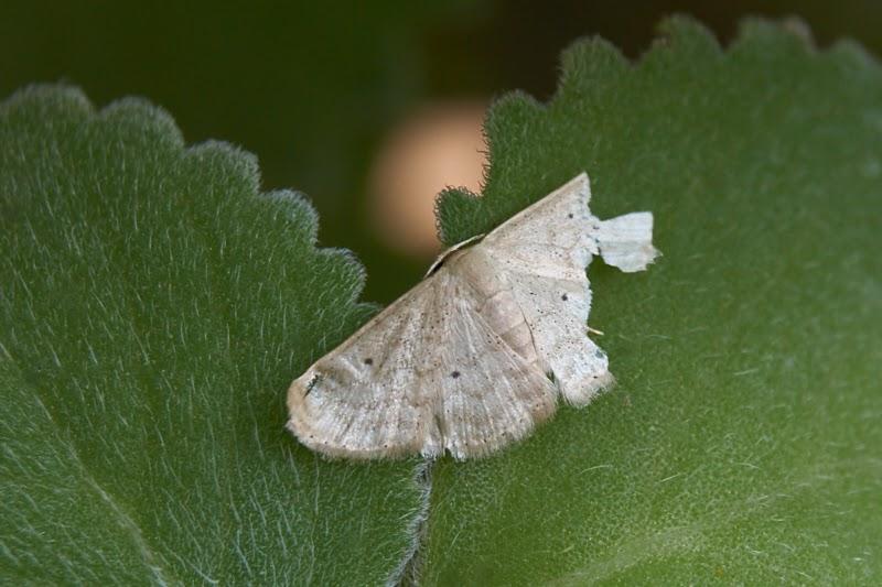 moth,return,need,photography,macro