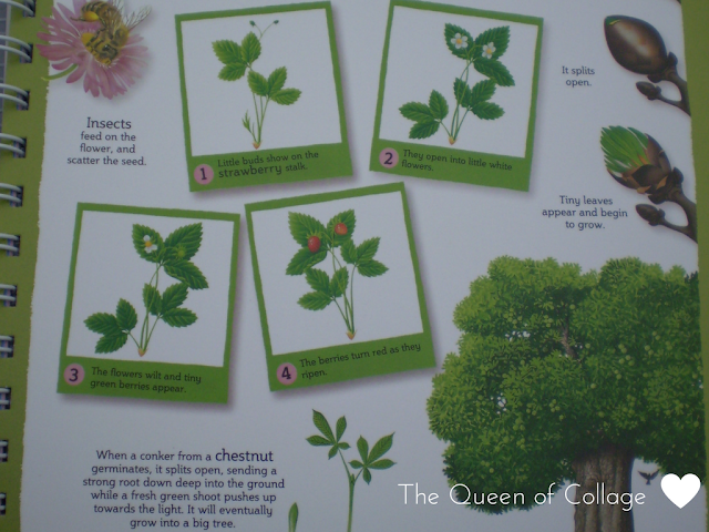 My First Encyclopedia of How Plants