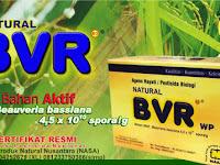 Natural BVR,Pengendalian Hama Wereng,Pengendalian Walang Sangit