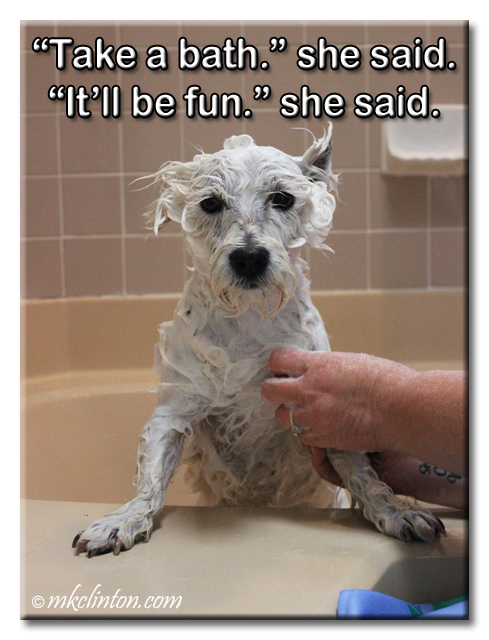 """Take a bath."" she said. ""It'll be fun."" she said. Pierre Westie meme"