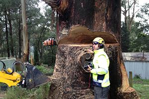 stump removal melbourne