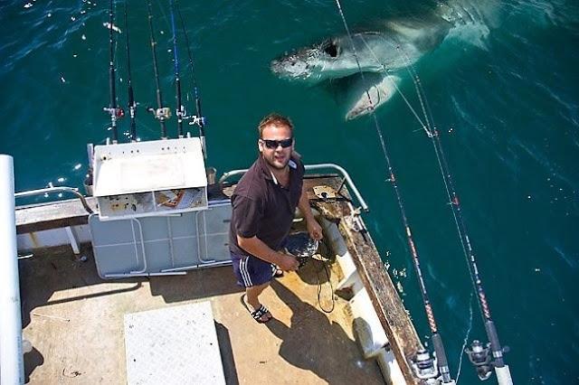 O tubarão também quer sair na foto