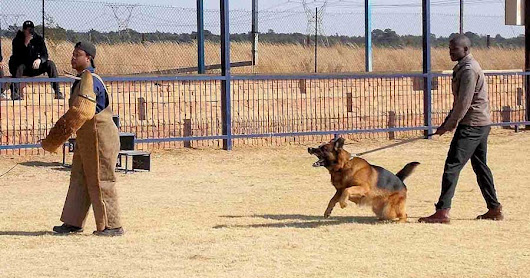 Best Protection Guard Dogs (South Africa)