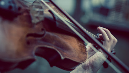 Violinist (Free)