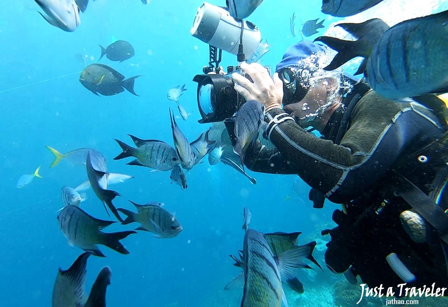 聖靈群島-景點-推薦-大堡礁-浮潛-潛水-行程-玩水-一日遊-遊記-攻略-自由行-旅遊-澳洲-Whitsundays-Great-Barrier-Reef