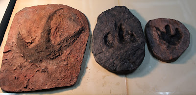 Dinossauros e geoparques são tema de exposição do Museu de Ciências da Terra