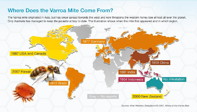 Avance del ácaro varroa en el mundo - Advancement of varroa mite in the world.